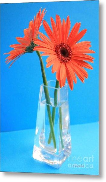 Orange Gerberas In A Vase - Aqua Background Metal Print
