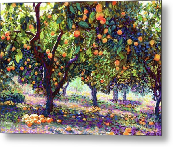 Orange Grove Of Citrus Fruit Trees Metal Print