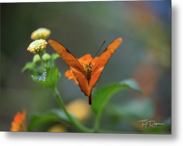 Orange Is The New Butterfly Metal Print
