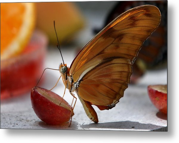 Orange Julia Butterfly Metal Print