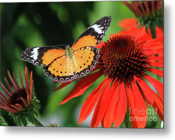 Orange Lacewing Metal Print