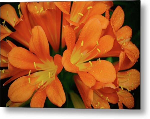 Orange Lilies No. 1-1 Metal Print