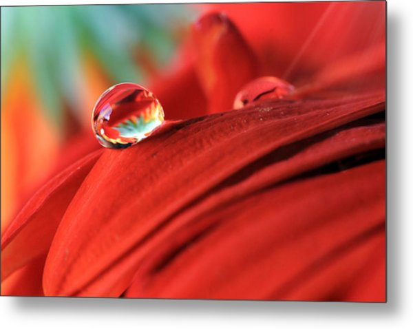 Orange Petals And Water Drops Metal Print