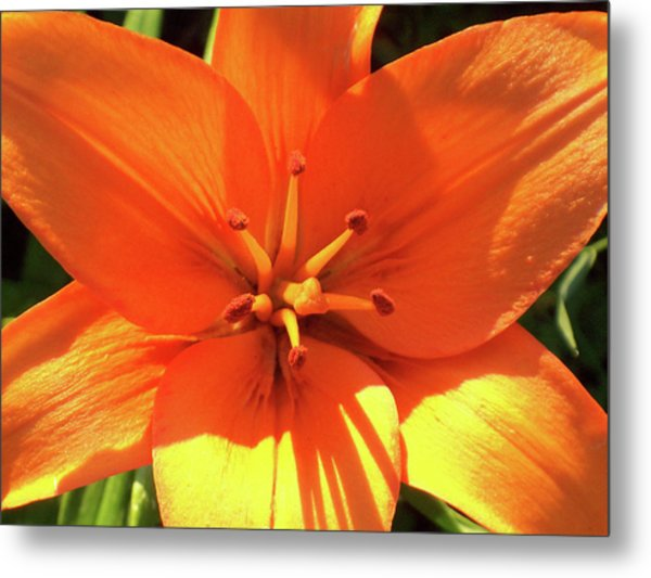 Orange Pop Metal Print