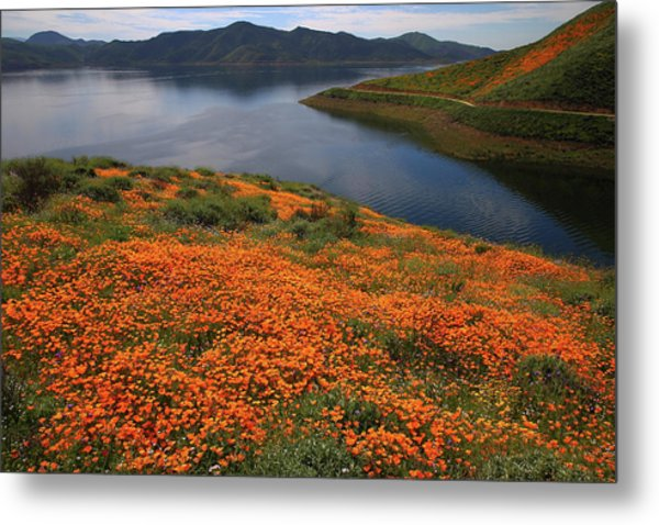 Orange Poppy Fields At Diamond Lake In California Metal Print