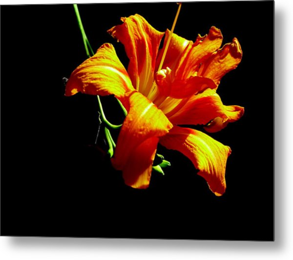 Orange Splendor Metal Print