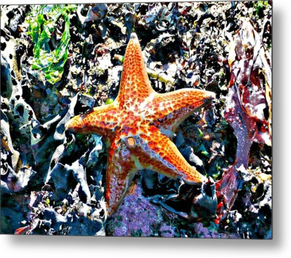 Metal Print featuring the photograph Orange Starfish by 'REA' Gallery