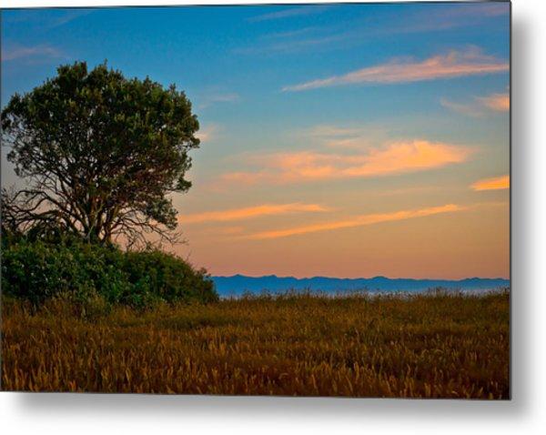 Orange Sunset With Tree Metal Print