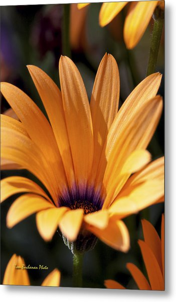 Orange Symphony Metal Print