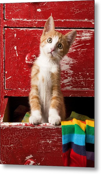Orange Tabby Kitten In Red Drawer  Metal Print