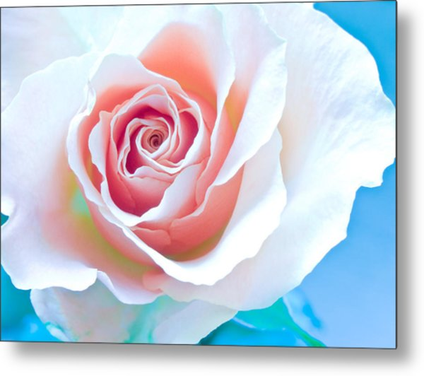 Orange White Blue Abstract Rose Metal Print