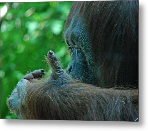 Orangutan 1 Metal Print