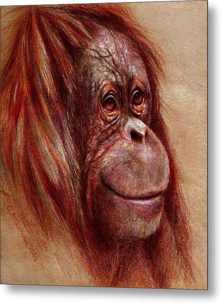 Orangutan Smiling - Sketch  Metal Print