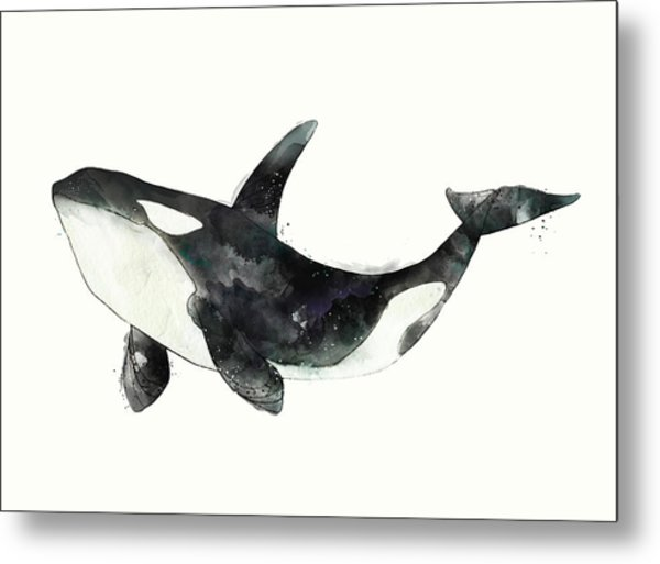 Orca From Arctic And Antarctic Chart Metal Print