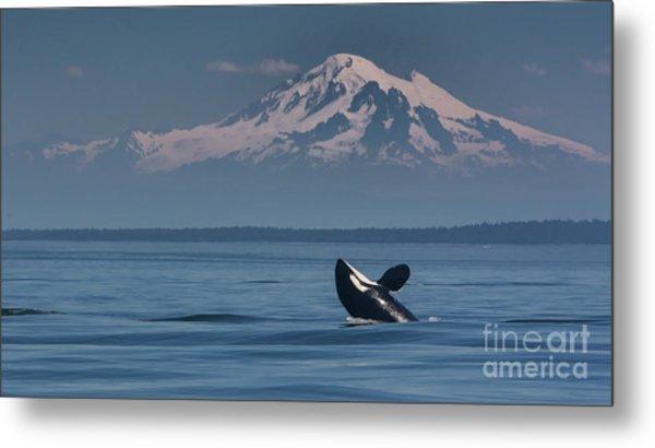 Orca - Mt. Baker Metal Print
