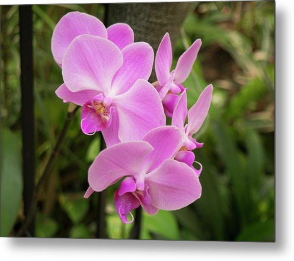 Orchid #6 Metal Print