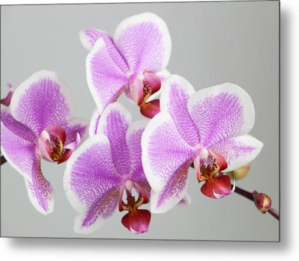 Orchid Array Metal Print
