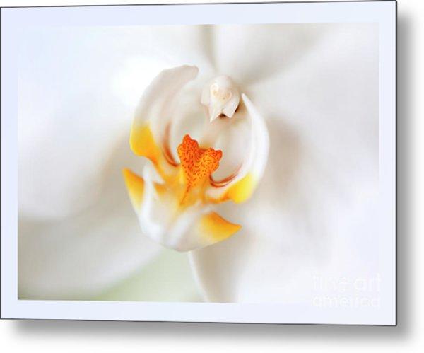 Orchid Detail Metal Print