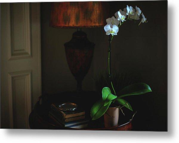 Orchid Morning Metal Print by Paul Green