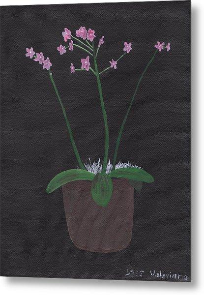 Orchid-phalaeropsis Hybrid Metal Print