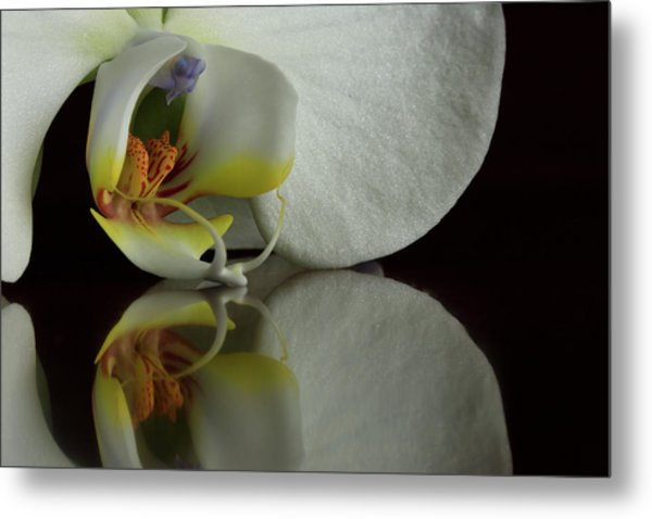 Orchid Reflected Metal Print