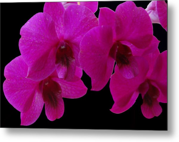 Orchid Song Metal Print