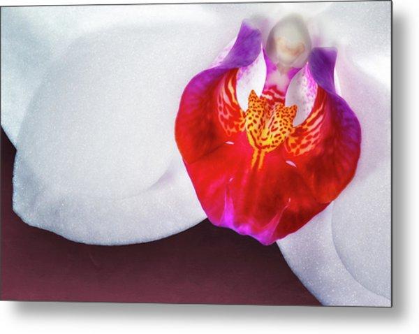 Orchid Up Close Metal Print