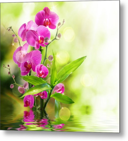 Orchidaceae Metal Print