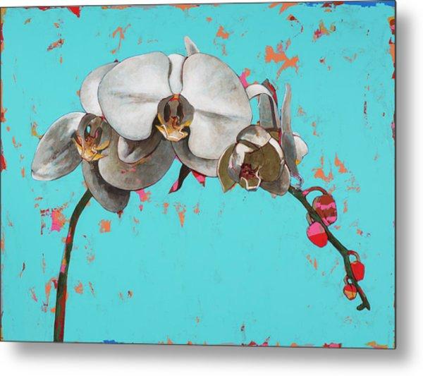 Orchids #5 Metal Print