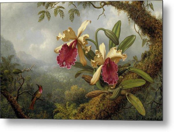 Orchids And Hummingbird Metal Print