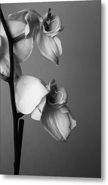 Orchids - April 2009 Metal Print