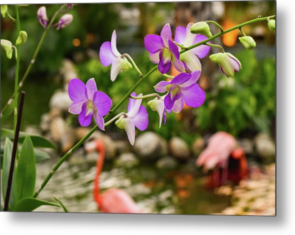 Orchids In Paradise Metal Print