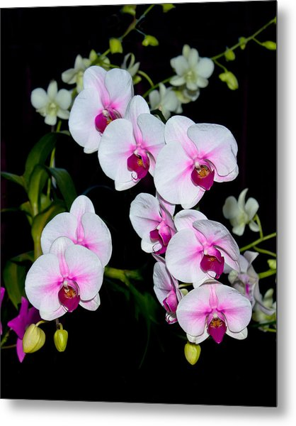 Orchids On Black Metal Print