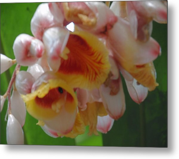 Orchids Metal Print by Ursula Wright
