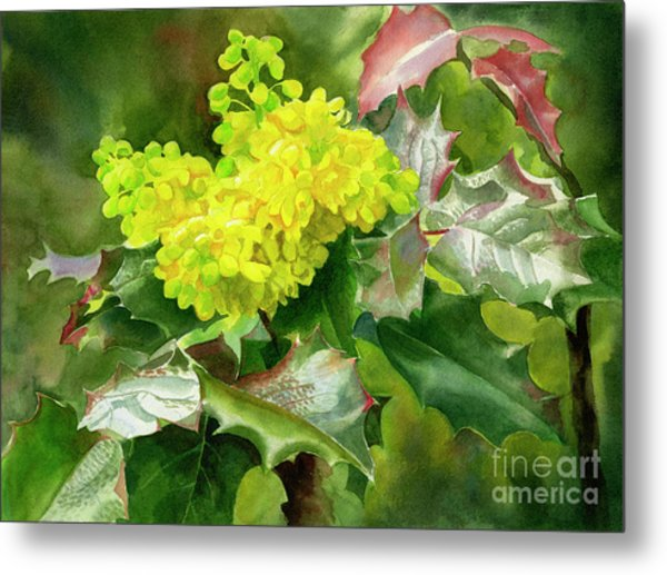 Oregon Grape Blossoms With Leaves Metal Print