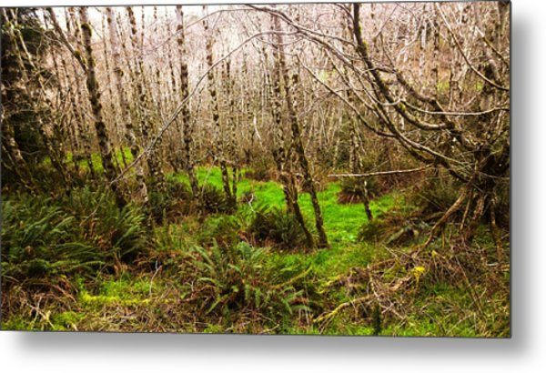 Oregon Rainforest Metal Print