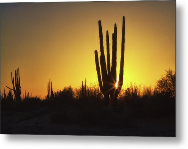 Organ Pipe Cactus Metal Print