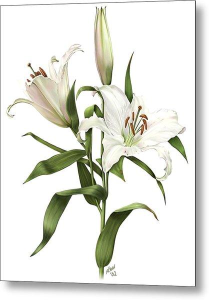 Oriental Lily Siberia Metal Print