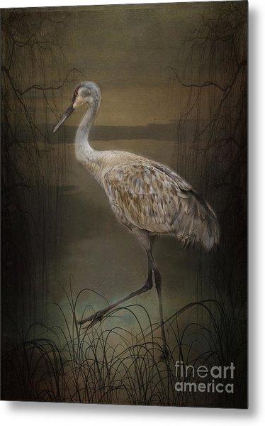 Oriental Sandhill Crane Metal Print