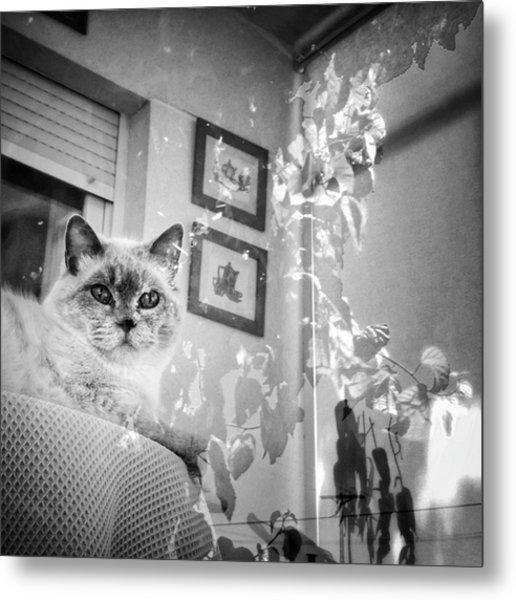 Orlando The Cat Metal Print
