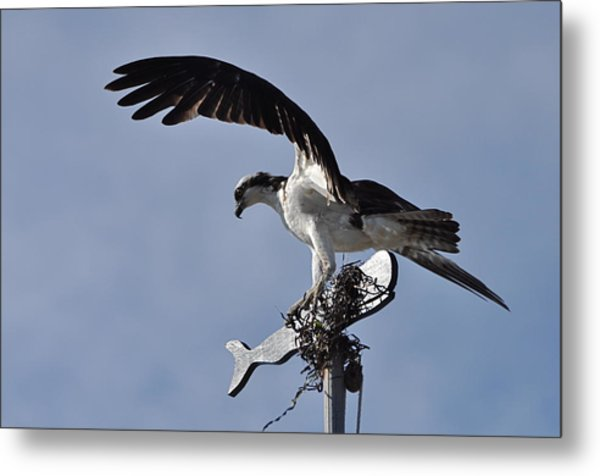 Osprey And Whale Metal Print