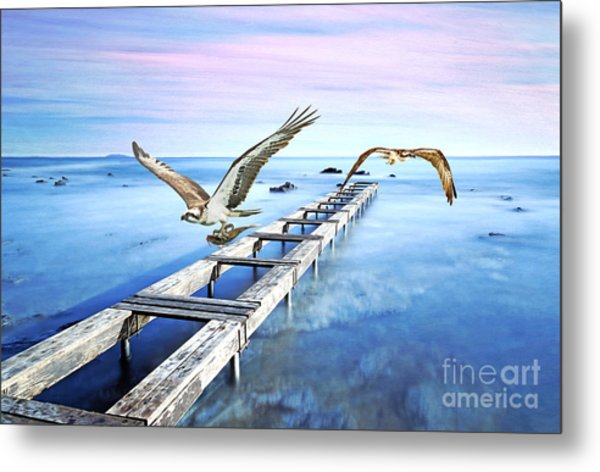 Osprey On The Move Metal Print