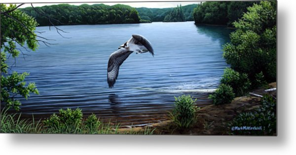 Osprey Over Clear Lake Metal Print by Mark Mittlesteadt
