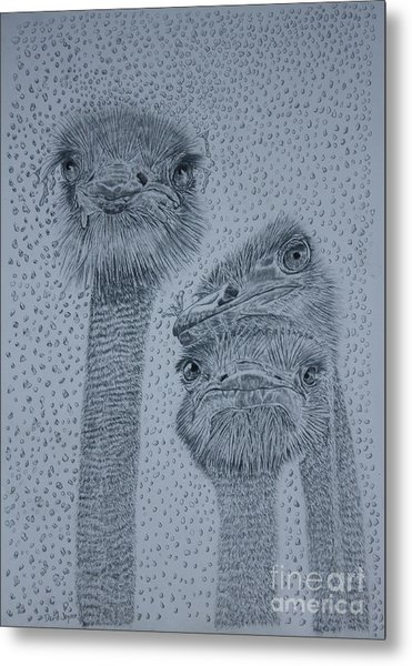 Ostrich Umbrella Metal Print