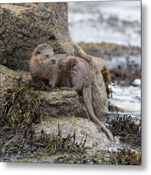 Otter Beside Loch Metal Print