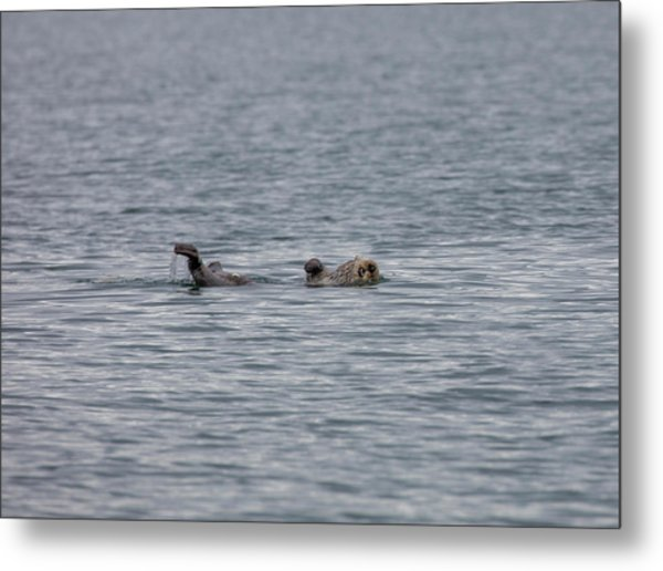 Otter On The Bay Metal Print