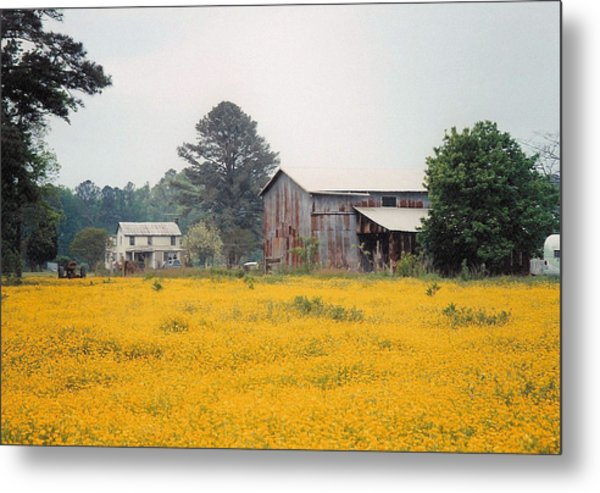 Out In The Country Metal Print by Robert Boyette