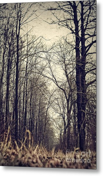 Out Of The Soil - Into The Forest Metal Print