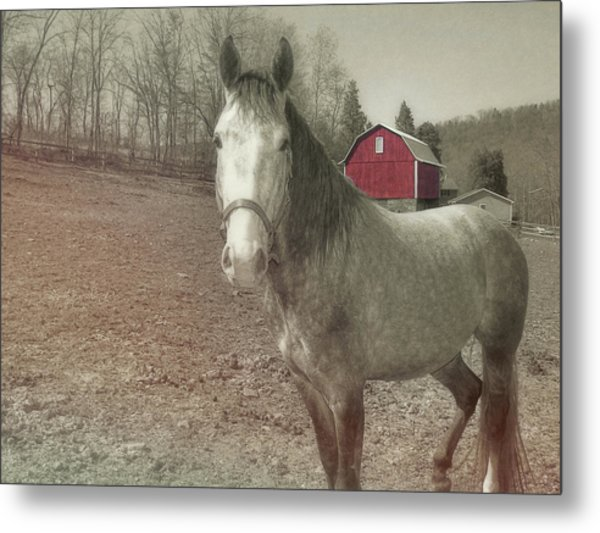 Out To Pasture Metal Print by JAMART Photography