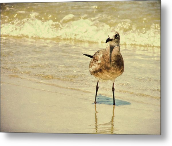 Outerbanks Gull Metal Print by JAMART Photography
